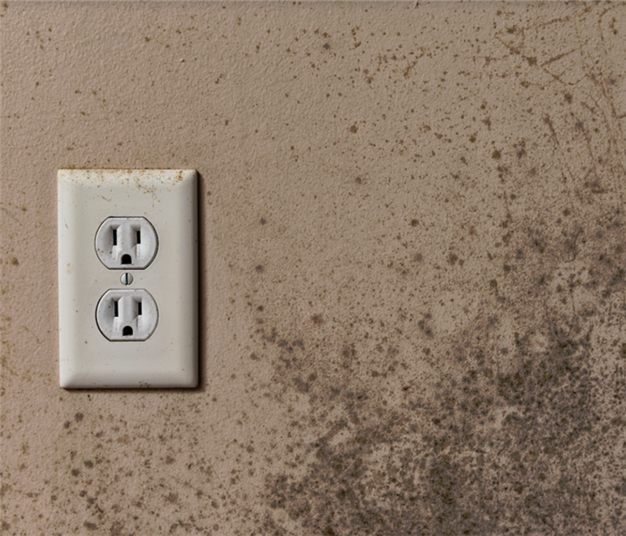 mold growing around an outlet on a wall
